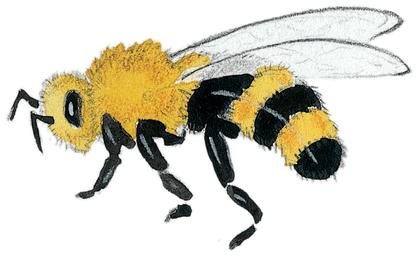 Les abeilles - illustration 9