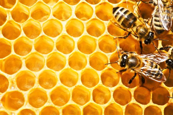 Les abeilles - illustration 2