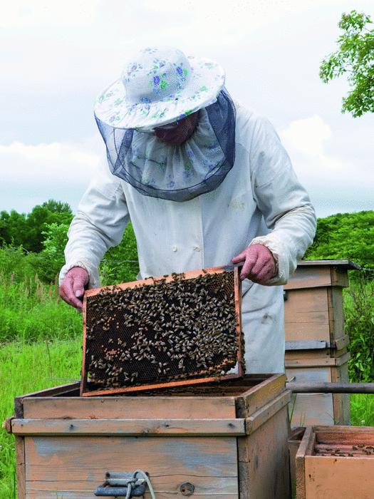 Les abeilles - illustration 3