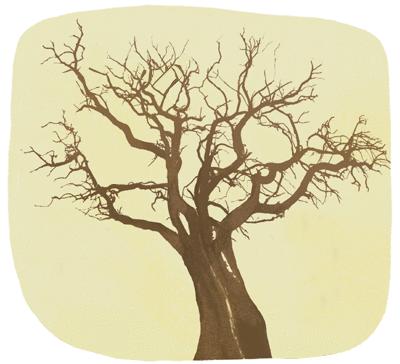 Les arbres et le kiwi - illustration 5