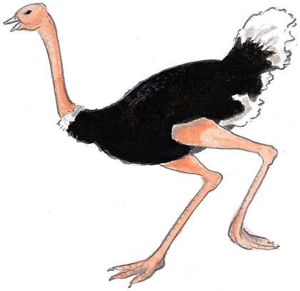 Le garçon et les autruches - illustration 2
