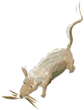 Origine du lion, du chat et du rat - illustration 3