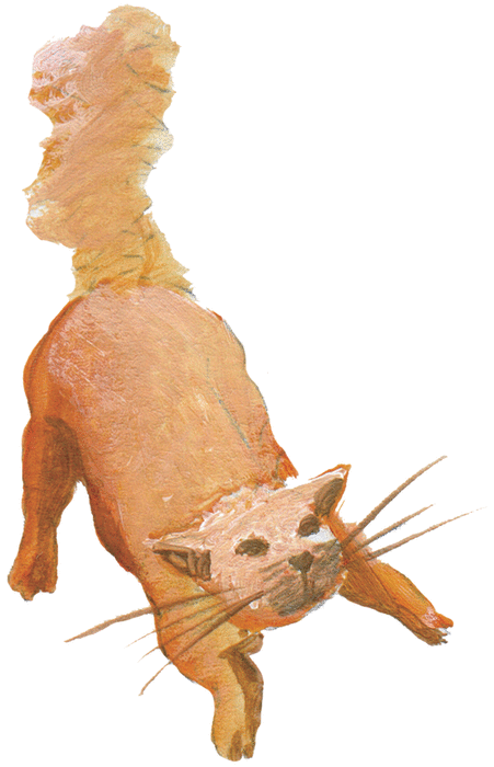 Origine du lion, du chat et du rat - illustration 4