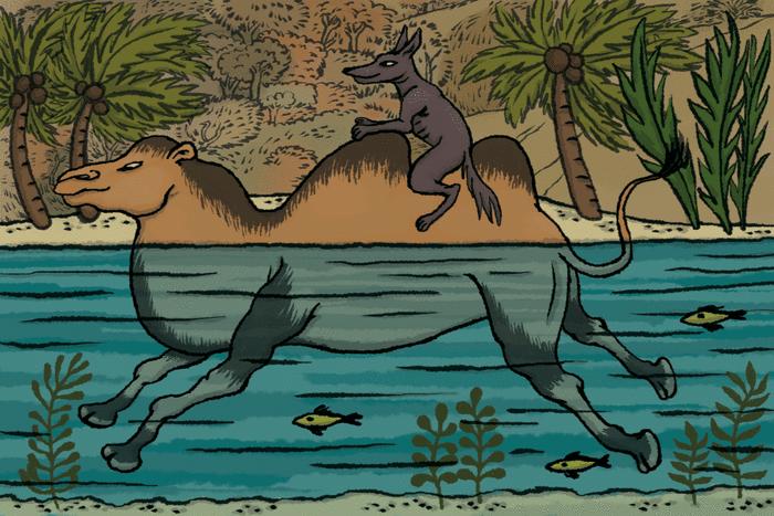 Le petit chacal et le chameau - illustration 1
