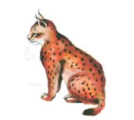 Les animaux de la montagne - illustration 2
