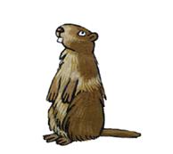 Les animaux de la montagne - illustration 5