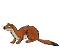 Les animaux de la montagne - illustration 6