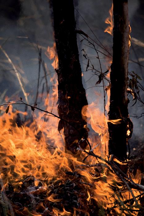 Les feux de forêts - illustration 1
