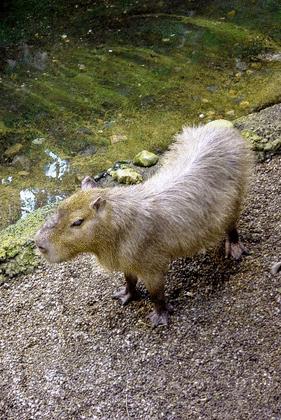 Le Rat de ville et le Rat des champs - illustration 2