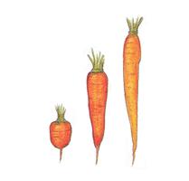 Savez-vous planter les choux ? - illustration 7