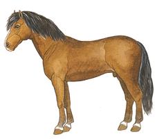 Ammamellen et Élias - illustration 10