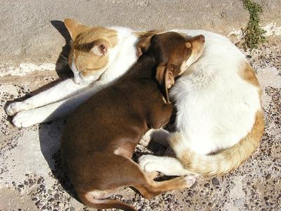 Les animaux domestiques - illustration 2
