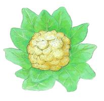 Savez-vous planter les choux ? - illustration 3