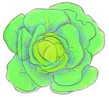 Savez-vous planter les choux ? - illustration 4