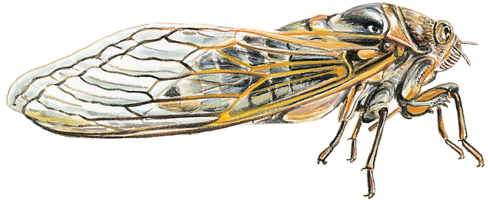 La Cigale et la Fourmi - illustration 2