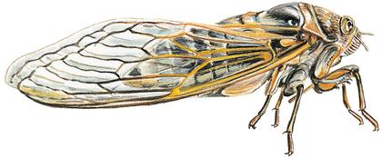 La Cigale et la Fourmi - illustration 11