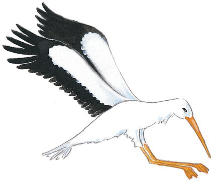 Le Renard et la Cigogne - illustration 3