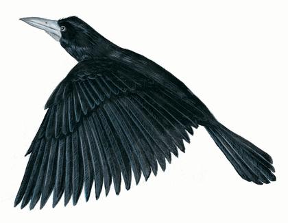 Le Corbeau et le Renard - illustration 8