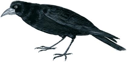 Le Corbeau et le Renard - illustration 5