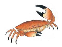 Urashimataro - illustration 6