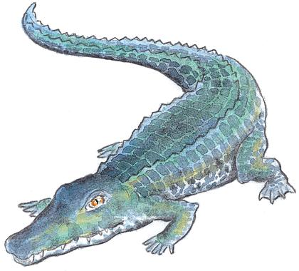 Ah, les crocodiles - illustration 2