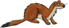 L'hermine et l'hiver - illustration 5