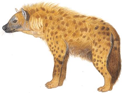La Lionne et l'Hyène - illustration 5
