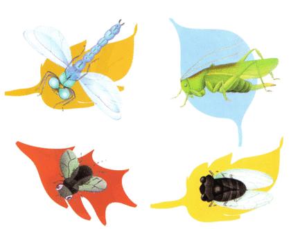 La Cigale et la Fourmi - illustration 5