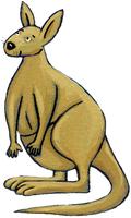 Les arbres et le kiwi - illustration 9