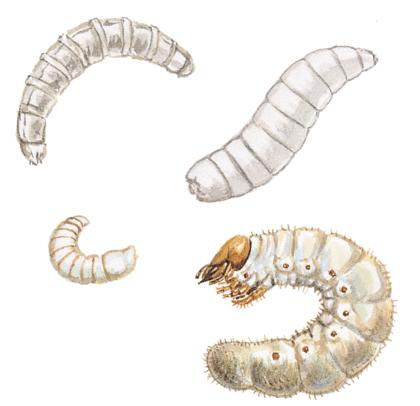 La Cigale et la Fourmi - illustration 9