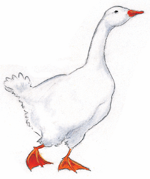 Rock and roll des gallinacés - illustration 3