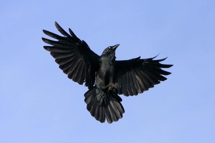Le Corbeau et le Renard - illustration 2