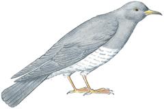 Alouette - illustration 4