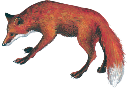 Le Corbeau et le Renard - illustration 4