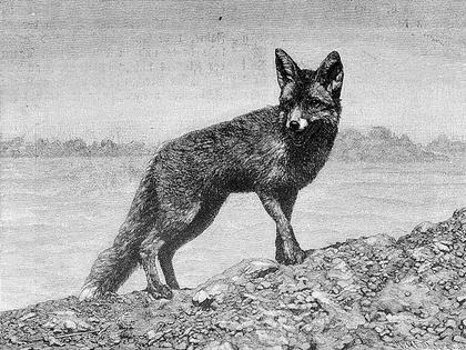 Le Corbeau et le Renard - illustration 6