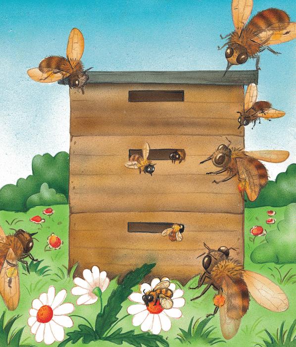 Les abeilles - illustration 5