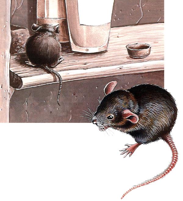 Une souris verte - illustration 3