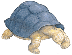 Le Lièvre et la Tortue - illustration 3
