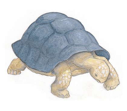Le Lièvre et la Tortue - illustration 8