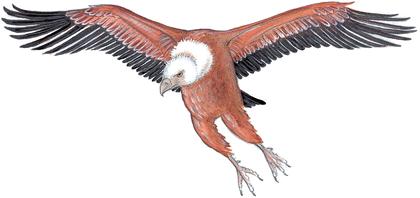 Les pattes de vautour - illustration 2